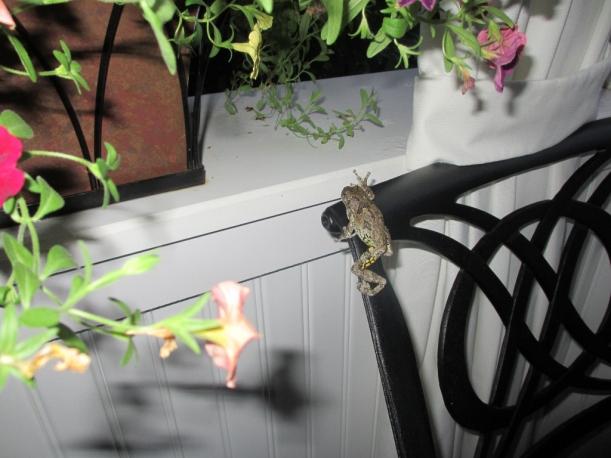 Porch Frog