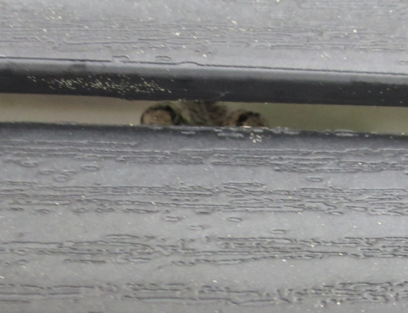 Porch Frog's Home