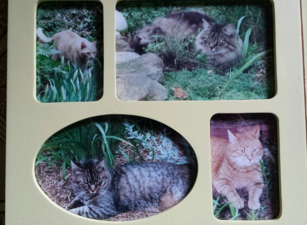 L-R clockwise: Momma Cat, Cuddles, Bradley, Peppermint. (Momma Cat is the only one still living at 19 yrs old!)