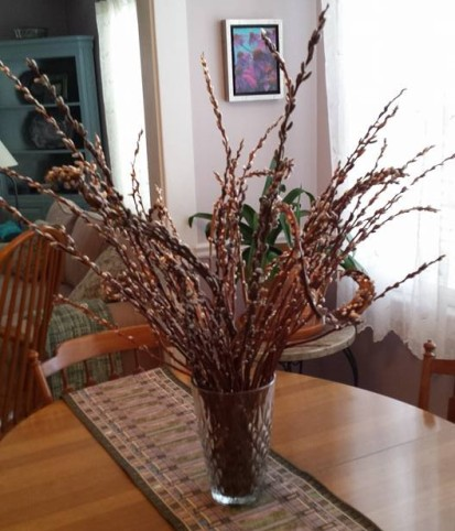 Pussy Willows in my home