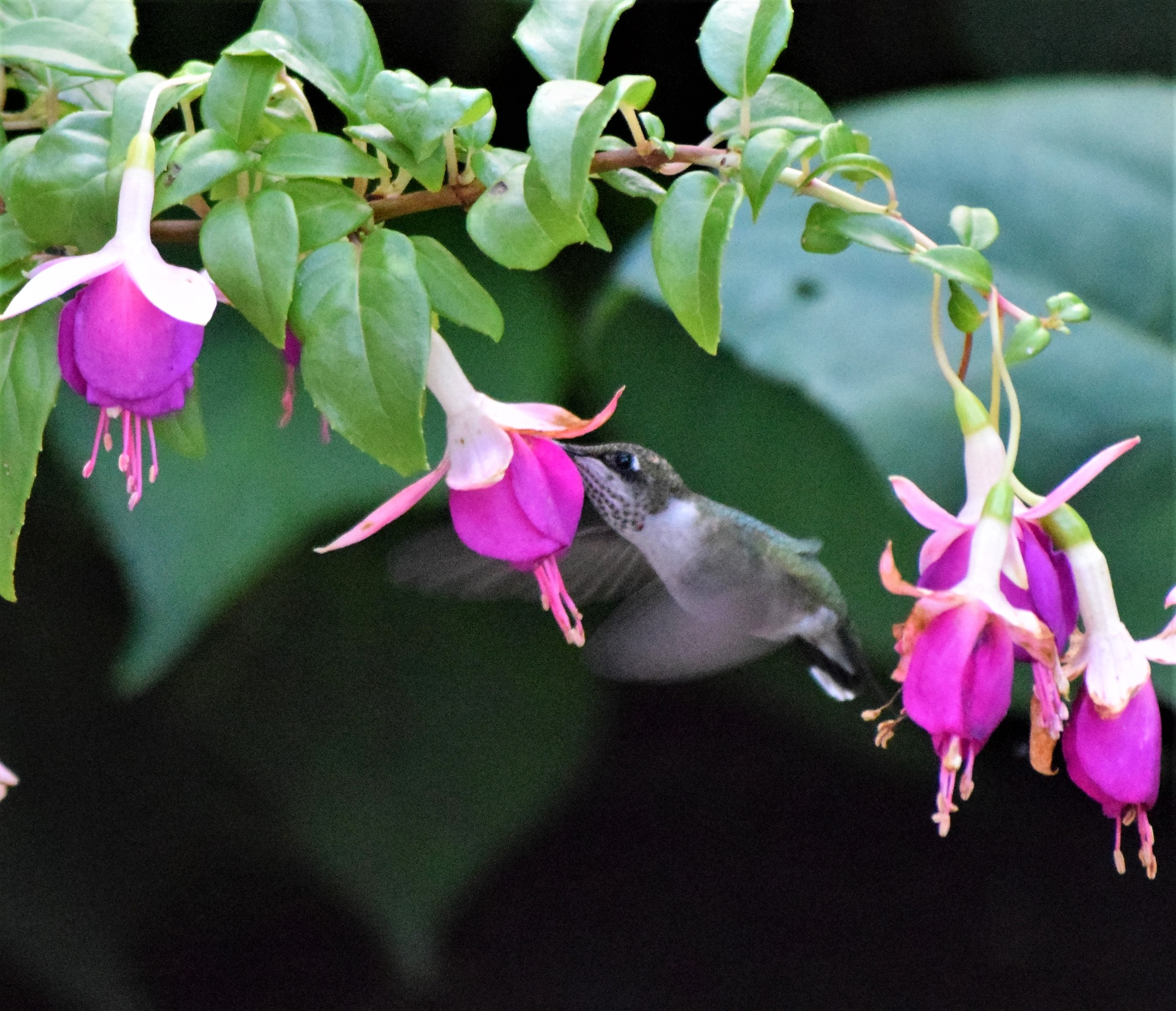 blog-fuschia-Aug