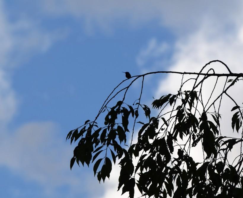 blog-treetop