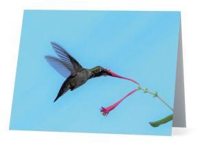 Hbird-Honeysuckle