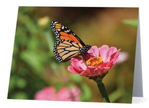 Monarch-Zinnia